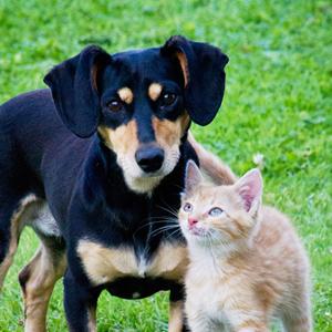 イヌ、ネコ